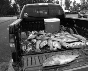 """One """"Get the Carp Outta Here"""" fisherman checked in nearly 300 lbs. of carp on June 5 at Grand Lake St. Marys earning him a $500 cash prize. Beacon photo by Charles Prince."""